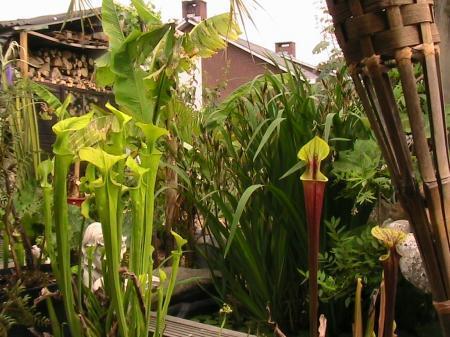 grond voor vleesetende planten