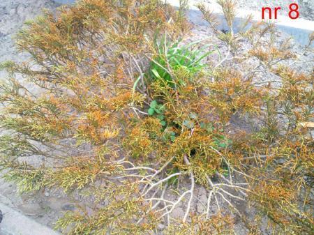 Een 8-tal planten e.d waarvan ik de naam niet weet