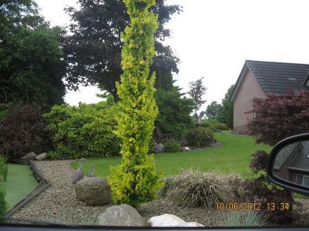 Hulp nodig wat is dit voor een plant/struik/boom