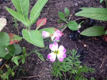 12 Onbekende planten in de tuin, iemand een idee?