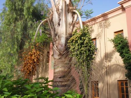 Identificatie palmen