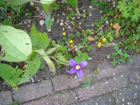 Naam planten