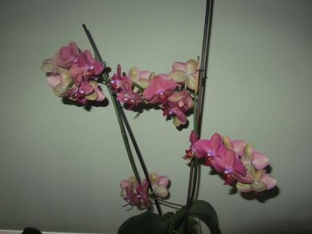 bloemstengel met zijtakken