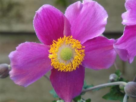 Nog een aantal bloemen