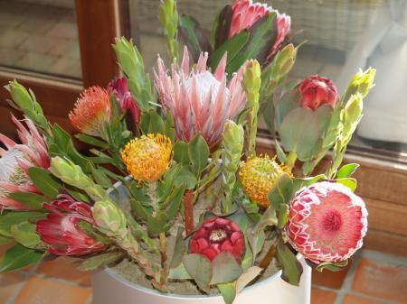 Naam van deze bloemen