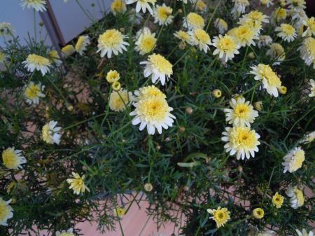 Weet u de naam van deze drie planten?