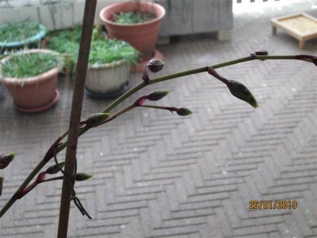 plantennaam