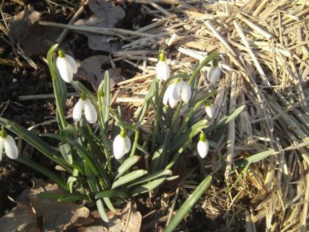 Eerste tekenen van de lente.