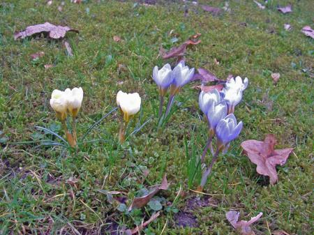 twee mij onbekende lentebodes