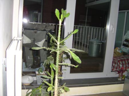 help, gaat mijn cactus dood??