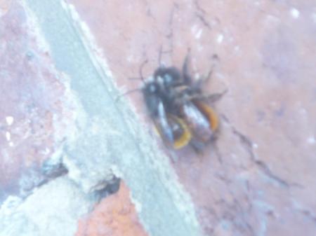 zijn dit bijen?