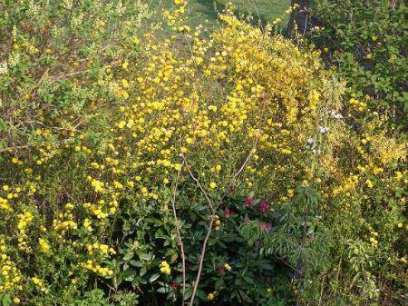 vrouwen houden niet van gele bloemen? ;-))