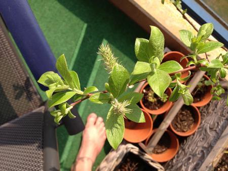 identificatie van deze plant