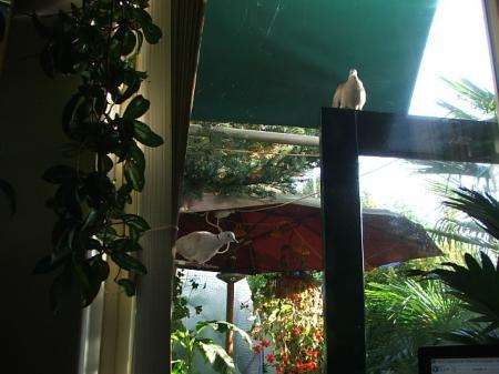 duivennest onder de parasol