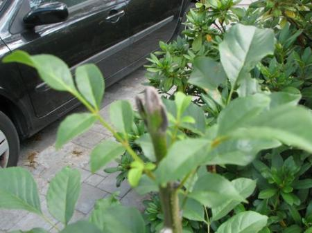 indentificatie tuinplant (onkruid?)