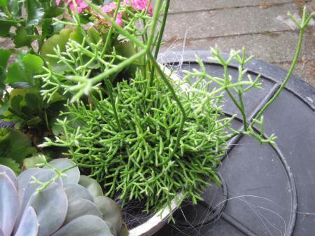 Grassoort buitengaats en (vet)plantje