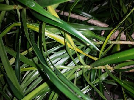 schimmel op plant