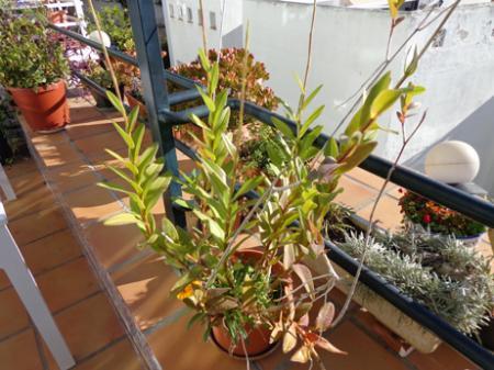 Welke orchidee en hoe verzorgen?