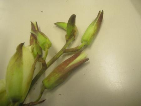In de winter bloeiende Yucca ?