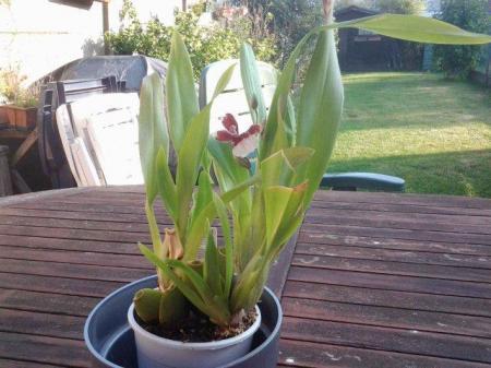 welke orchidee is dit