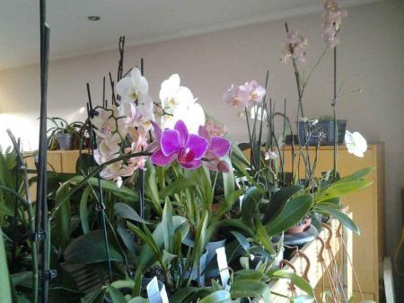 Orchidee uitgebloeid