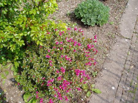 Welke planten/bloemen zijn dit?