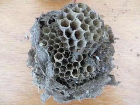 welke insecten hebben hierin gewoond