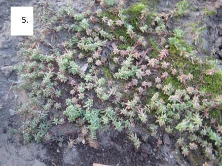 aantal onbekende planten, wat is de naam?