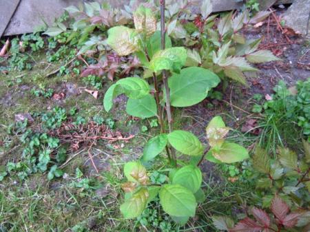 Planten in huurtuin
