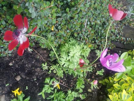 welke bloem / plant