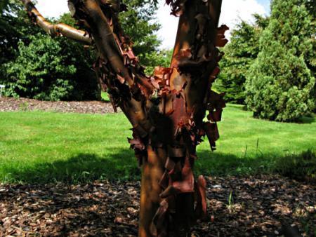 Onbekende planten uit Arboretum 't Leen