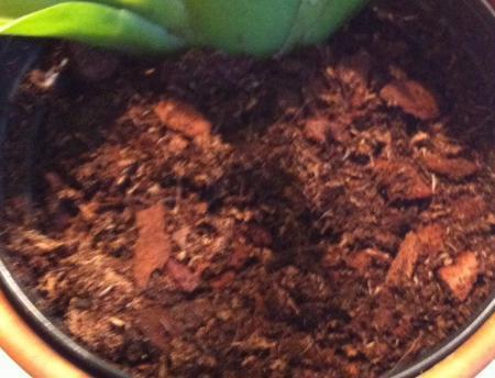 Cambria orchidee hulp met aarde!!!?