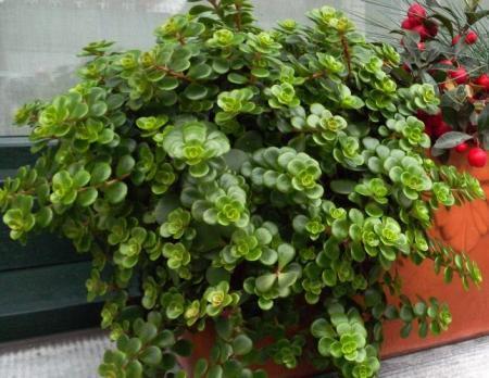 Tijdens wandeling mooi onbekend plantje gezien