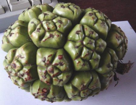 zaden uit zanzibar (afrika)