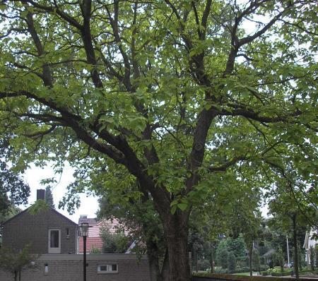 een boom en een vaste plant