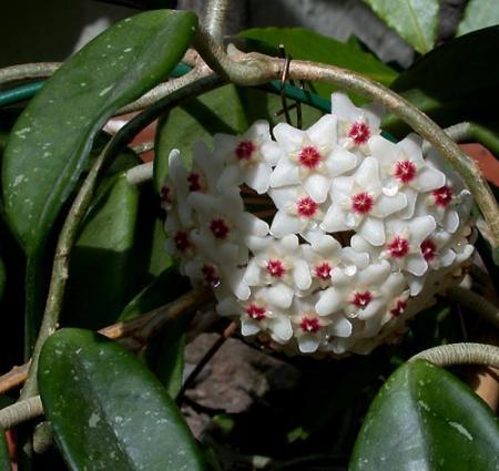 Wie kent deze mooie plant?