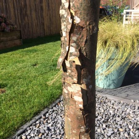 Zieke boom?!