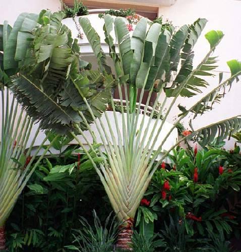 meest exotische plant