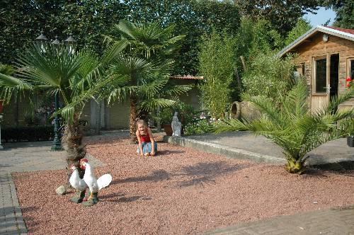 Foto's van de tuin aan het einde van de zomer.