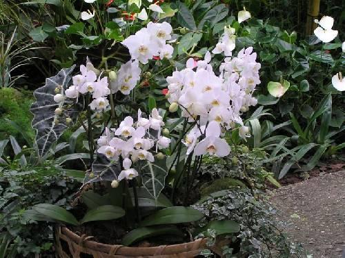 """De naam van deze """"Prachtige"""" plant?"""