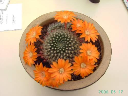 cactusaarde