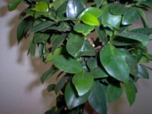 Wat voor bonsai is dit?