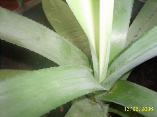 Wie kent de naam van deze plant en hoe te verzorge