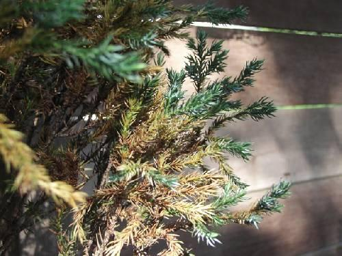 Wat is dit voor boompje en leeft het nog? +foto