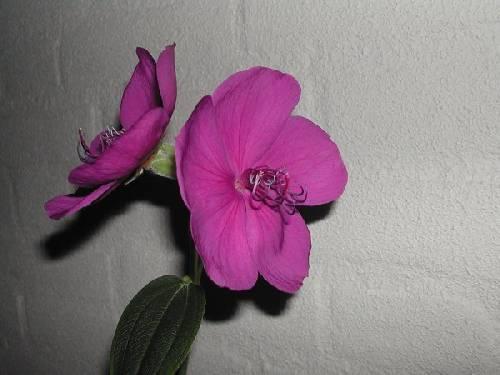 een mij onbekende plant
