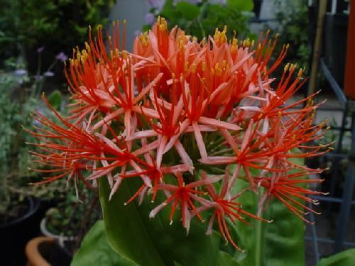 Hoe heet deze bloem (heel aparte bloem)