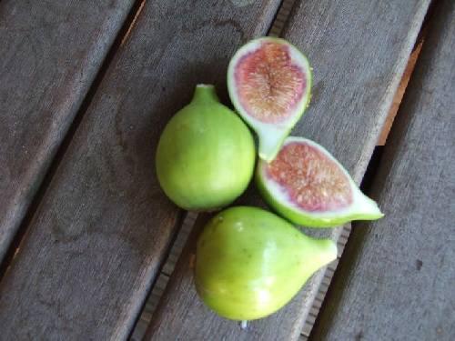 Vijgenboom (onrijpe vijgen)