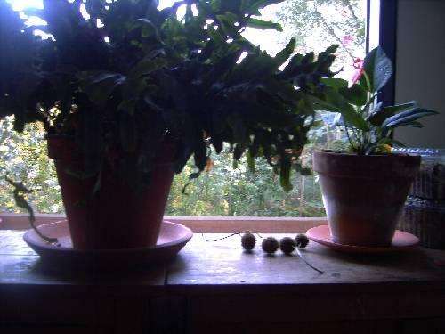 Beginnersvraag: hoe kamerplant in pot zetten