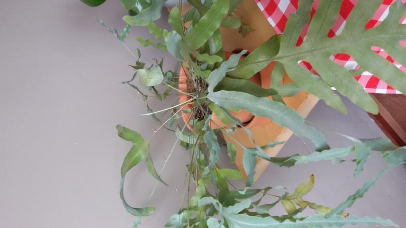 plant in zn geheel