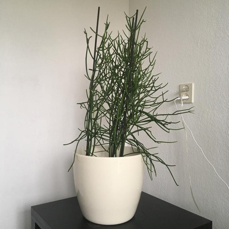 Weer iemand wat dit voor plant is waarvoor ik 35 heb uitgegeven?!